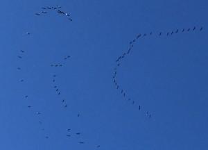 Los pájaros se agolpaban para mirar el seiscientos